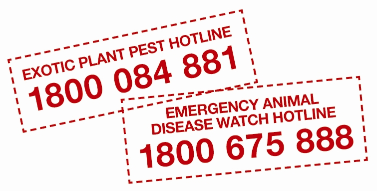 Exotic pest hotline 1800084881 and emergency animal disease watch hotline 1800675888