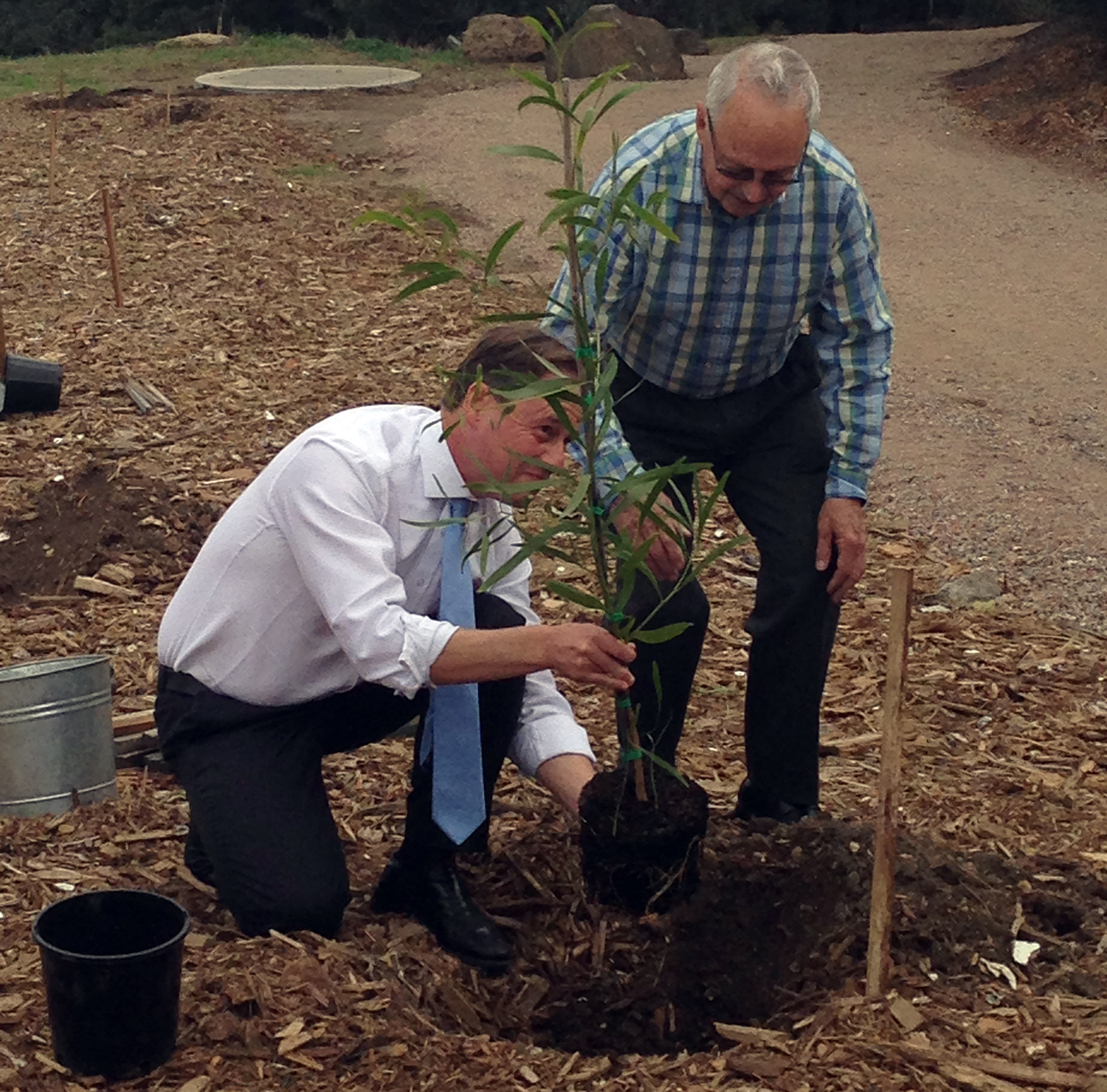 Greening the west first tree being planted in May 2015