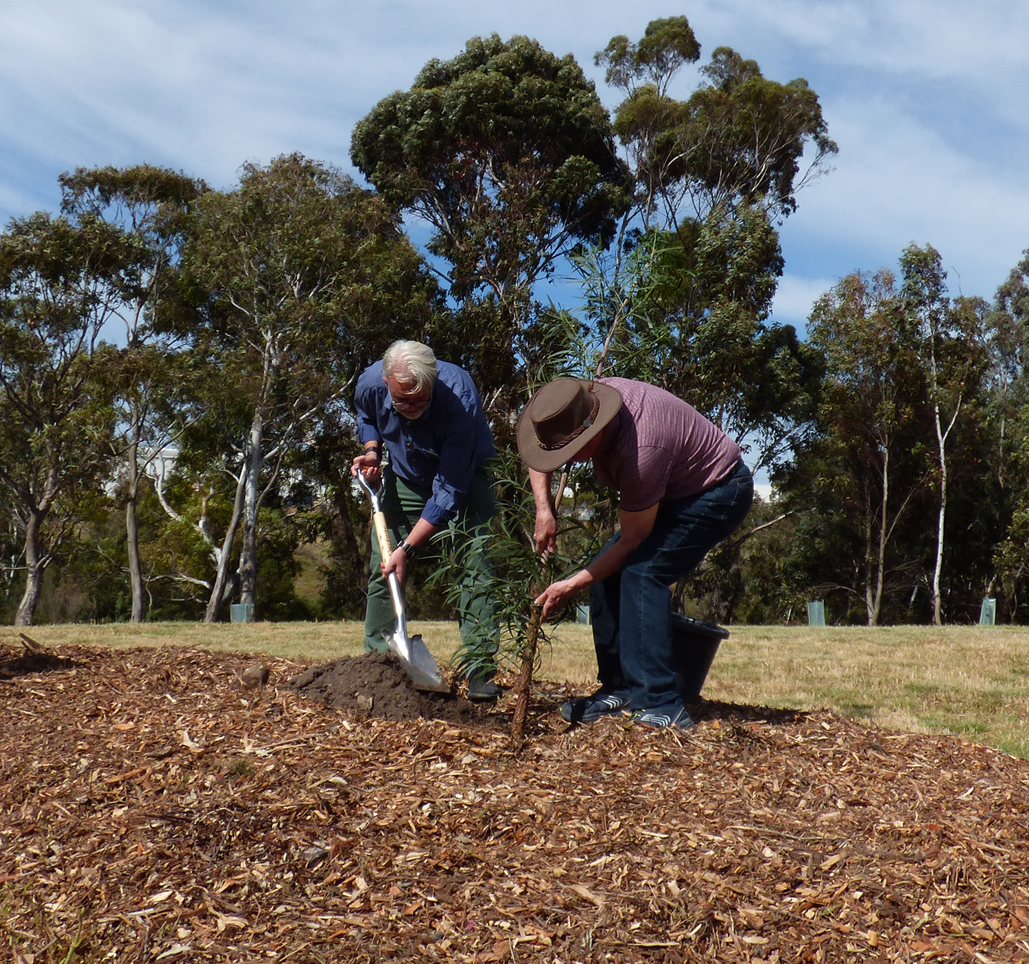 Greening the west 1 millionth tree being planted in October 2018