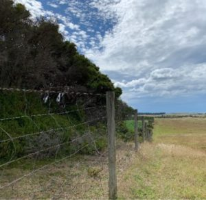 Farm with fencing separating grazing area for trees and vegetation